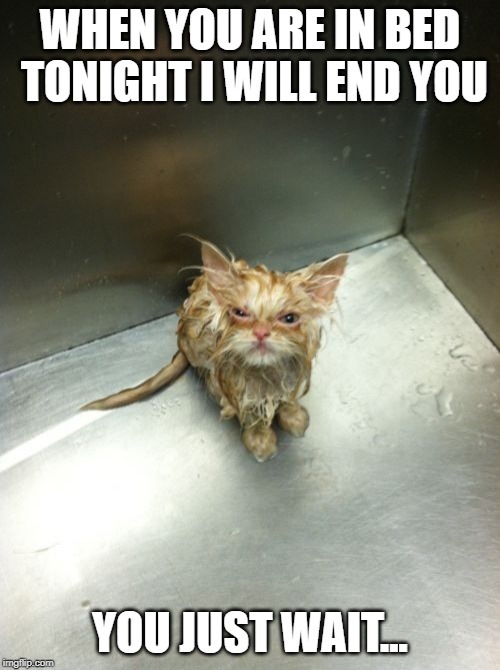 Kill You Cat |  WHEN YOU ARE IN BED TONIGHT I WILL END YOU; YOU JUST WAIT... | image tagged in memes,kill you cat | made w/ Imgflip meme maker