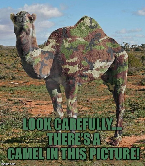 Camelflage | LOOK CAREFULLY.... THERE'S A CAMEL IN THIS PICTURE! | image tagged in memes,camel | made w/ Imgflip meme maker