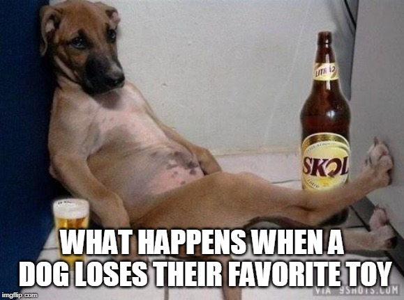 Dogs and their Toys |  WHAT HAPPENS WHEN A DOG LOSES THEIR FAVORITE TOY | image tagged in funny dog,memes,i could use a drink | made w/ Imgflip meme maker