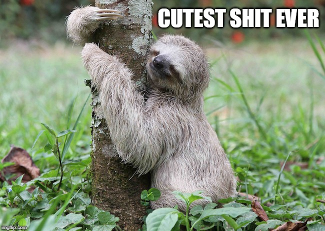 Sloth Taking a Dump | CUTEST SHIT EVER | image tagged in sloth taking a dump,cute,sloth,sloths,tree hugger,animals | made w/ Imgflip meme maker