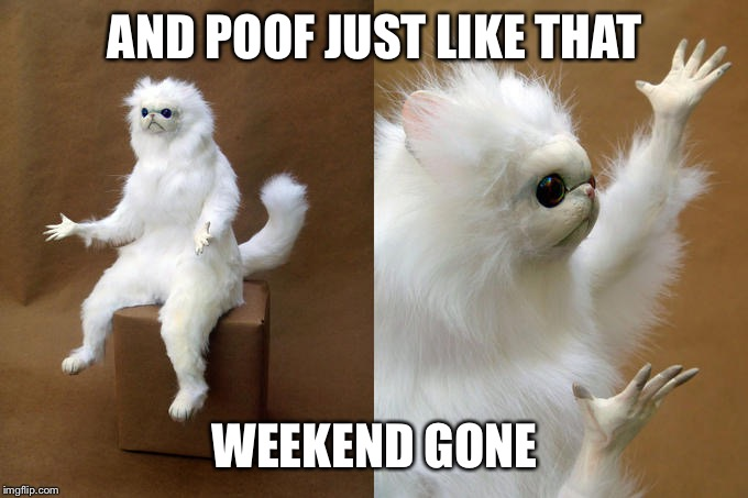 Persian Cat Room Guardian | AND POOF JUST LIKE THAT WEEKEND GONE | image tagged in memes,persian cat room guardian | made w/ Imgflip meme maker