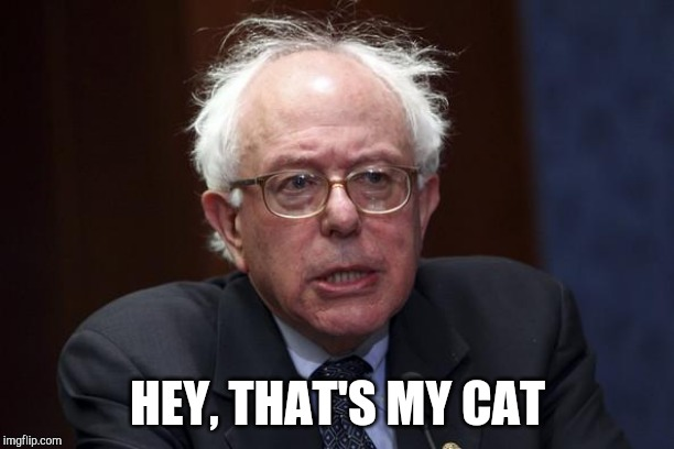 HEY, THAT'S MY CAT | image tagged in bernie sanders | made w/ Imgflip meme maker