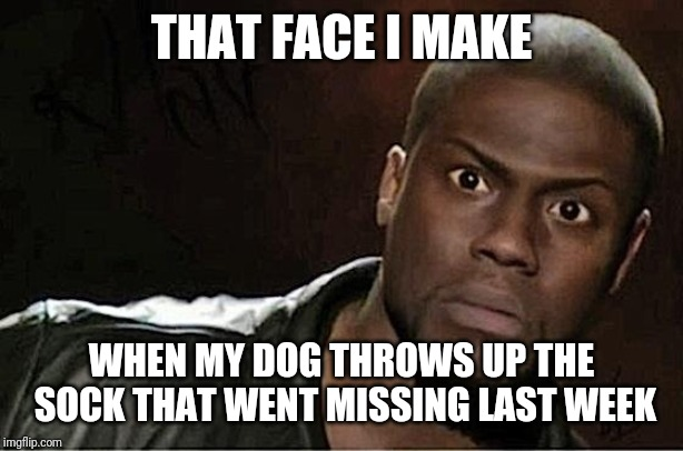 Kevin Hart | THAT FACE I MAKE WHEN MY DOG THROWS UP THE SOCK THAT WENT MISSING LAST WEEK | image tagged in memes,kevin hart | made w/ Imgflip meme maker