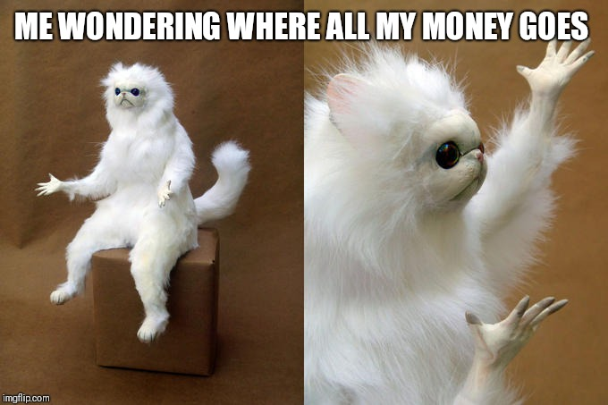 Persian Cat Room Guardian | ME WONDERING WHERE ALL MY MONEY GOES | image tagged in memes,persian cat room guardian | made w/ Imgflip meme maker