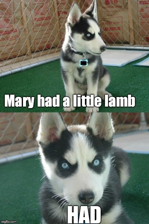 Insanity Puppy | Mary had a little lamb HAD | image tagged in memes,insanity puppy | made w/ Imgflip meme maker