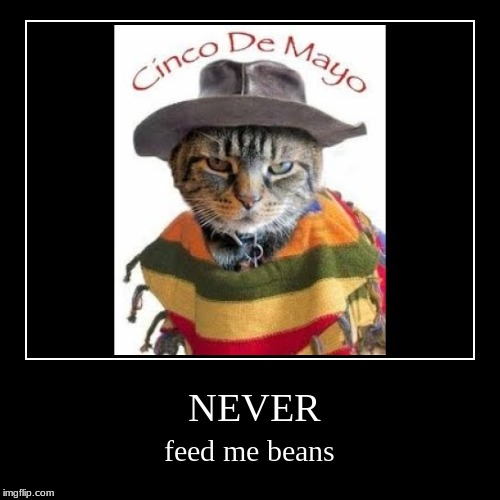NEVER | feed me beans | image tagged in demotivationals,farts,gas,cat,smelly,beans | made w/ Imgflip demotivational maker