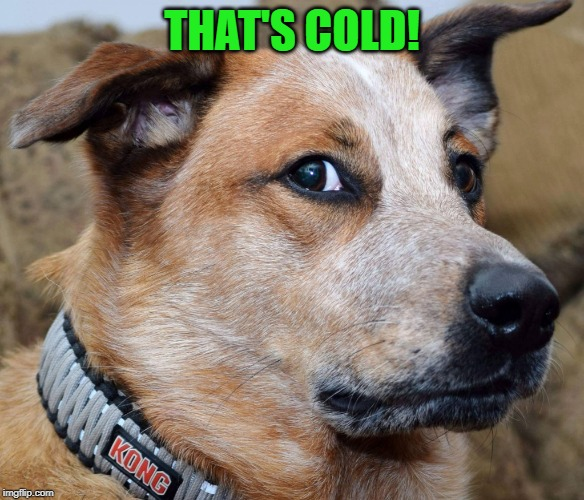 Wtf dog | THAT'S COLD! | image tagged in wtf dog | made w/ Imgflip meme maker