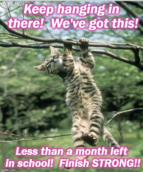 hang in there, determined kitty | Keep hanging in there!  We've got this! Less than a month left in school!  Finish STRONG!! | image tagged in hang in there determined kitty | made w/ Imgflip meme maker