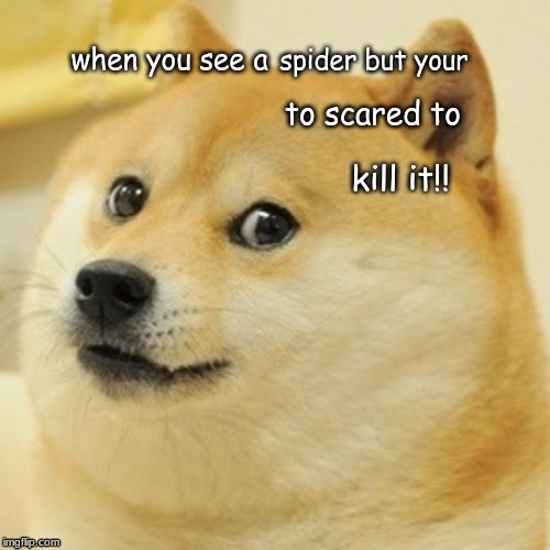 Doge | when you see a spider but your to scared to kill it!! | image tagged in memes,doge | made w/ Imgflip meme maker