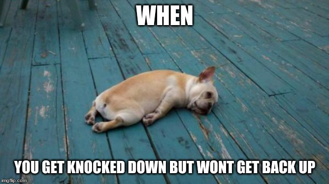 tired dog | WHEN YOU GET KNOCKED DOWN BUT WONT GET BACK UP | image tagged in tired dog | made w/ Imgflip meme maker