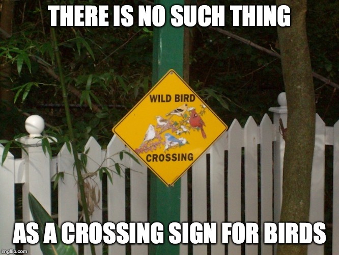 Wild Bird Crossing Sign | THERE IS NO SUCH THING AS A CROSSING SIGN FOR BIRDS | image tagged in funny road signs,memes | made w/ Imgflip meme maker