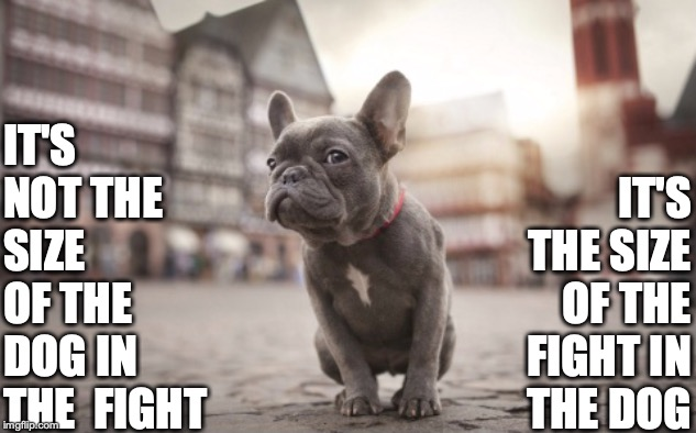 Tough Frenchie | IT'S NOT THE SIZE OF THE DOG IN THE  FIGHT IT'S THE SIZE OF THE FIGHT IN   THE DOG | image tagged in french,bulldog,frenchie,tough,fight,size | made w/ Imgflip meme maker