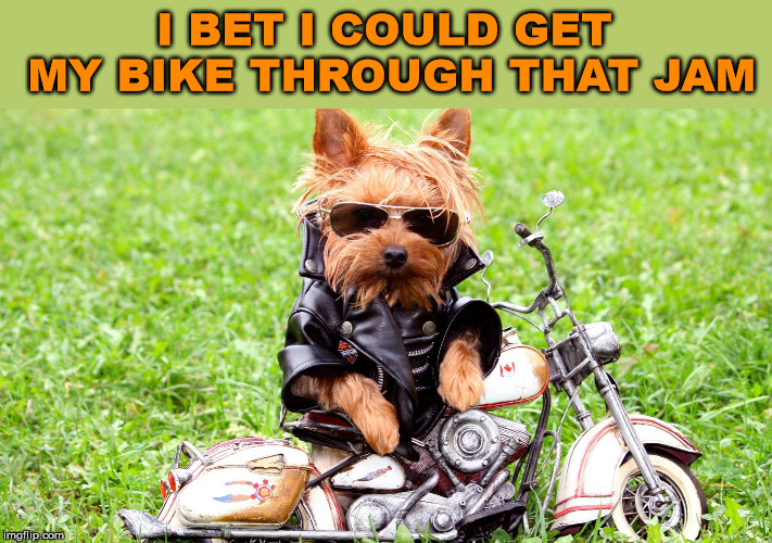 cool dog | I BET I COULD GET MY BIKE THROUGH THAT JAM | image tagged in cool dog | made w/ Imgflip meme maker
