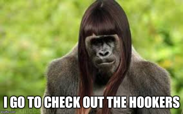 Ape In Wig | I GO TO CHECK OUT THE HOOKERS | image tagged in ape in wig | made w/ Imgflip meme maker
