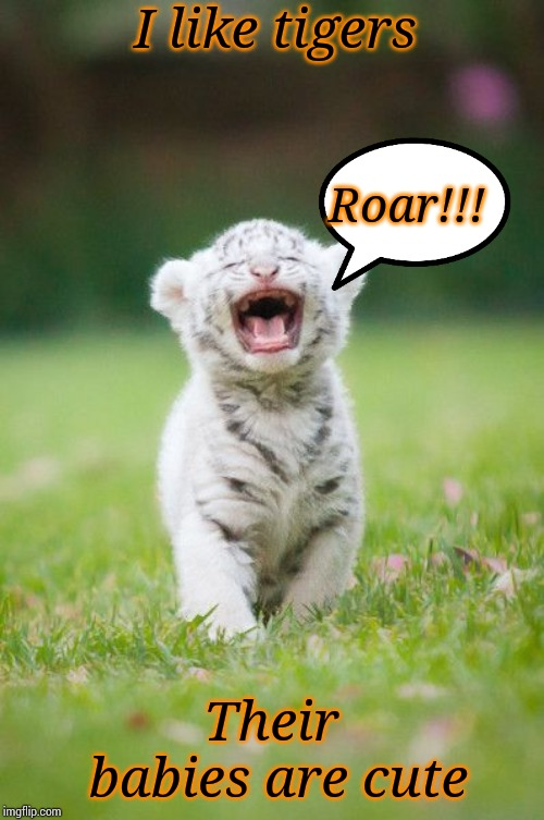 baby tiger roaring | I like tigers Their babies are cute Roar!!! | image tagged in baby tiger roaring | made w/ Imgflip meme maker