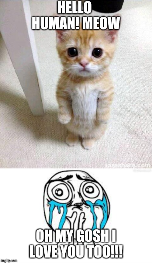 HELLO HUMAN! MEOW OH MY GOSH I LOVE YOU TOO!!! | image tagged in memes,crying because of cute,cute cat | made w/ Imgflip meme maker