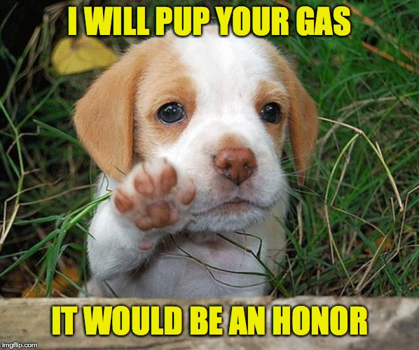 dog puppy bye | I WILL PUP YOUR GAS IT WOULD BE AN HONOR | image tagged in dog puppy bye | made w/ Imgflip meme maker