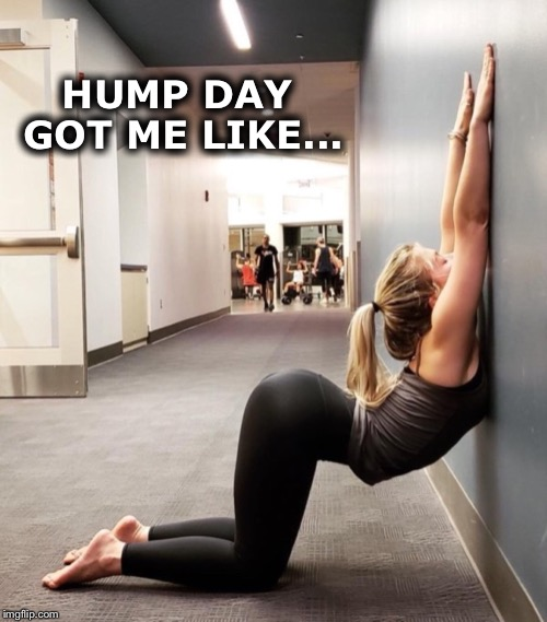 Do you ever get the mid-week blues? |  HUMP DAY GOT ME LIKE... | image tagged in hump day | made w/ Imgflip meme maker