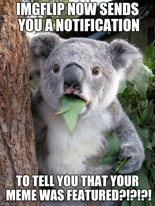 Surprised Koala |  IMGFLIP NOW SENDS YOU A NOTIFICATION; TO TELL YOU THAT YOUR MEME WAS FEATURED?!?!?! | image tagged in memes,surprised koala | made w/ Imgflip meme maker