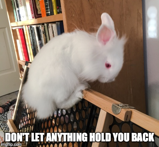 Let Nothing Stop You | DON'T LET ANYTHING HOLD YOU BACK | image tagged in animals,bunnies,rabbits,inspirational | made w/ Imgflip meme maker