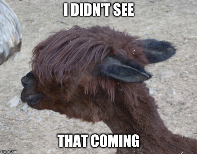 LLama Hear Your Augmented Reality | I DIDN'T SEE THAT COMING | image tagged in llama hear your augmented reality | made w/ Imgflip meme maker