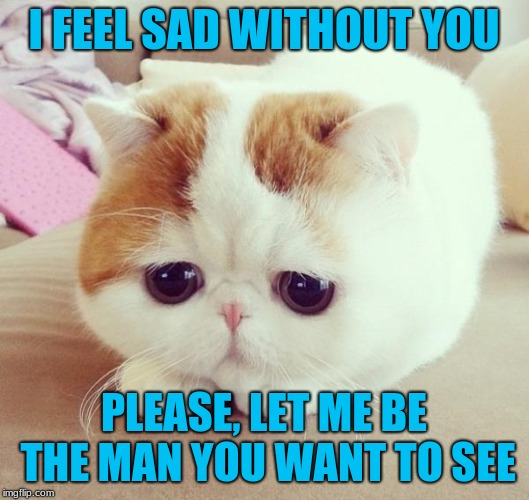 Sad Cat | I FEEL SAD WITHOUT YOU PLEASE, LET ME BE THE MAN YOU WANT TO SEE | image tagged in sad cat | made w/ Imgflip meme maker