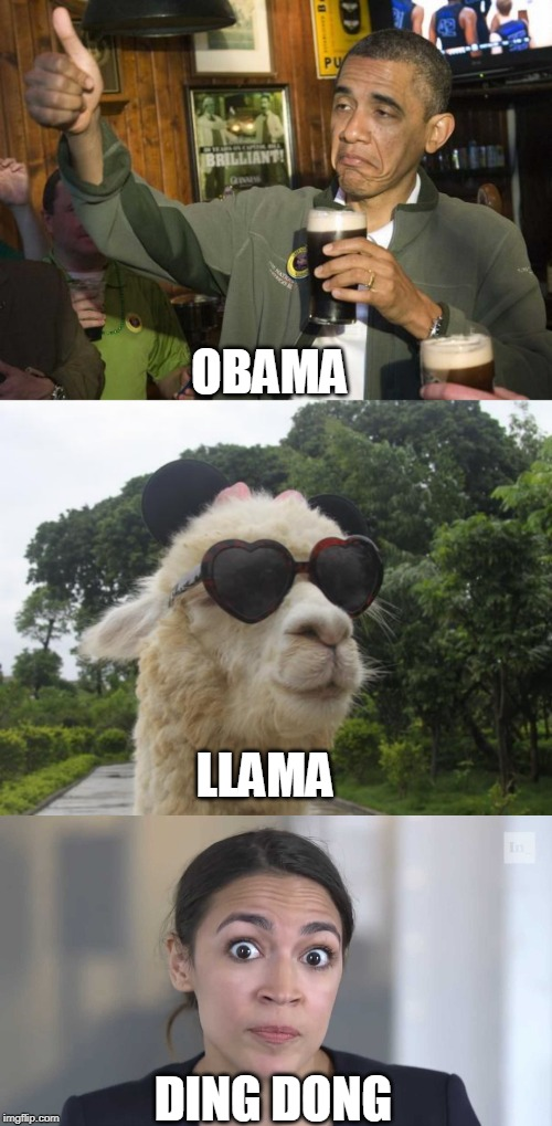 OBAMA DING DONG LLAMA | image tagged in cool llama,obama beer,aoc stumped,politics | made w/ Imgflip meme maker