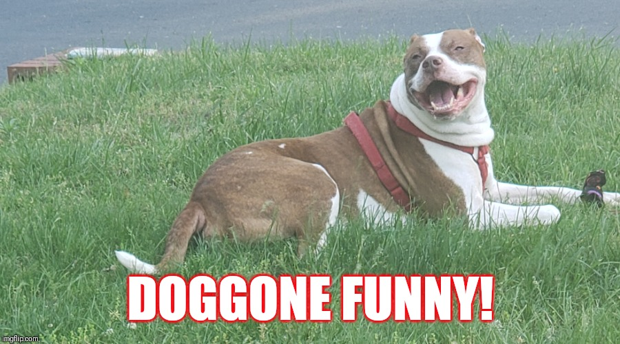 DOGGONE FUNNY! | image tagged in lol,too funny,dog memes | made w/ Imgflip meme maker