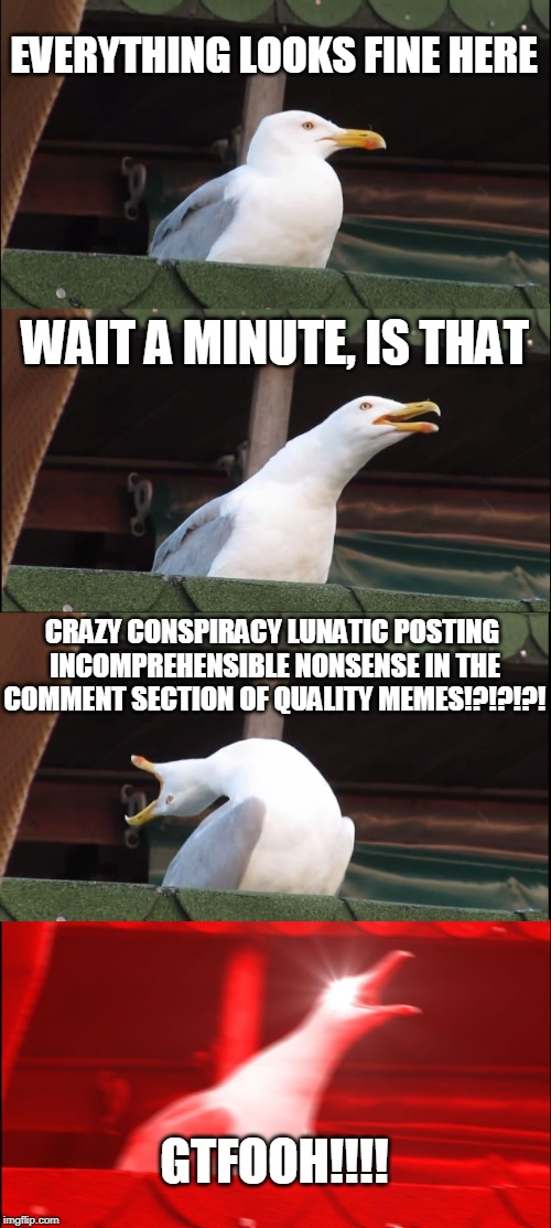 Inhaling Seagull Meme | EVERYTHING LOOKS FINE HERE WAIT A MINUTE, IS THAT CRAZY CONSPIRACY LUNATIC POSTING INCOMPREHENSIBLE NONSENSE IN THE COMMENT SECTION OF QUALI | image tagged in memes,inhaling seagull | made w/ Imgflip meme maker