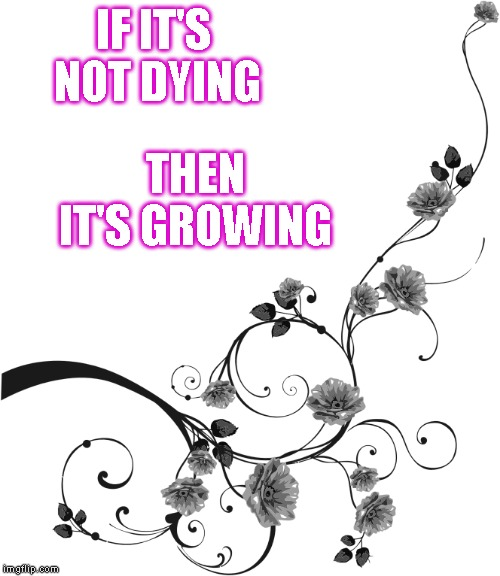 If it's not dying, then it's growing | IF IT'S NOT DYING THEN IT'S GROWING | image tagged in quotes,inspirational quote,inspirational,inspirational memes | made w/ Imgflip meme maker