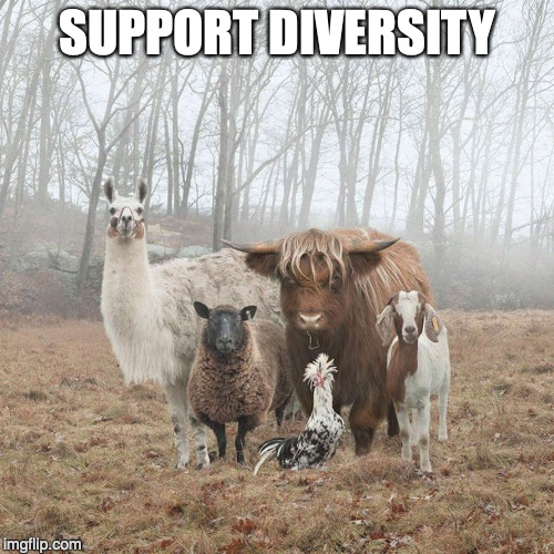 Diversity | SUPPORT DIVERSITY | image tagged in animals,diversity | made w/ Imgflip meme maker