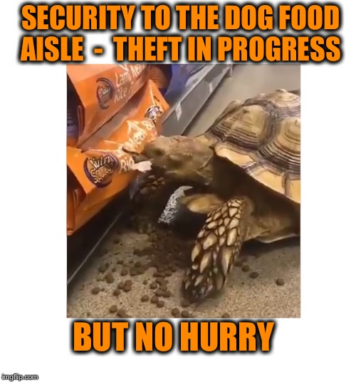 I can haz this dog food! | SECURITY TO THE DOG FOOD AISLE  -  THEFT IN PROGRESS BUT NO HURRY | image tagged in shoplifting tortoise | made w/ Imgflip meme maker