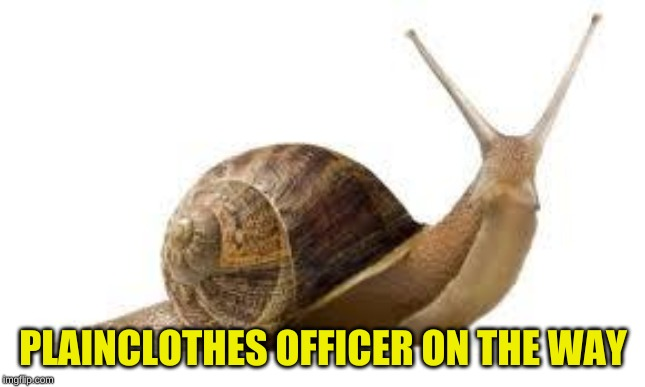 SNAIL | PLAINCLOTHES OFFICER ON THE WAY | image tagged in snail | made w/ Imgflip meme maker
