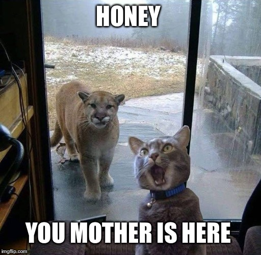 House Cat with Mountain Lion at the door | HONEY YOU MOTHER IS HERE | image tagged in house cat with mountain lion at the door | made w/ Imgflip meme maker