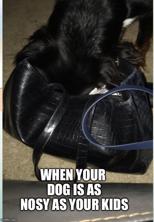 WHEN YOUR DOG IS AS NOSY AS YOUR KIDS | image tagged in funny memes,memes,meme,so true memes,original meme,dog memes | made w/ Imgflip meme maker