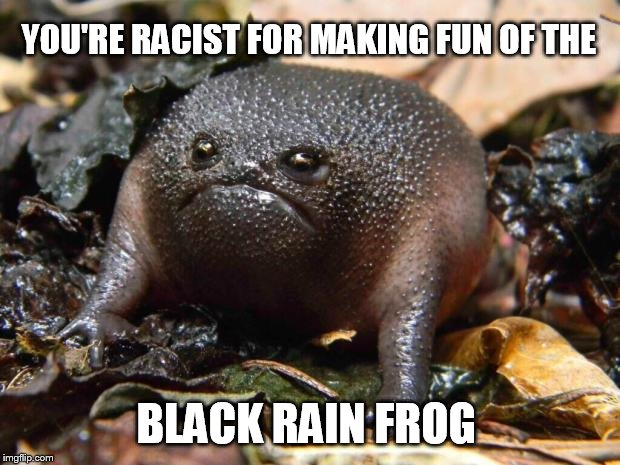 as offended as it is ugly | YOU'RE RACIST FOR MAKING FUN OF THE BLACK RAIN FROG | image tagged in black rain frog | made w/ Imgflip meme maker