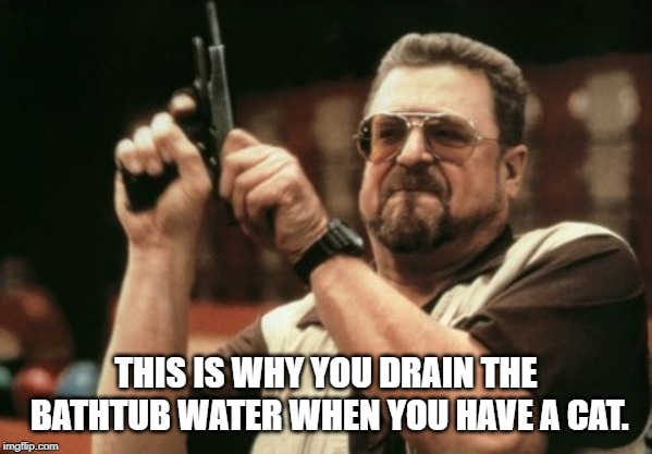 Am I The Only One Around Here Meme | THIS IS WHY YOU DRAIN THE BATHTUB WATER WHEN YOU HAVE A CAT. | image tagged in memes,am i the only one around here | made w/ Imgflip meme maker
