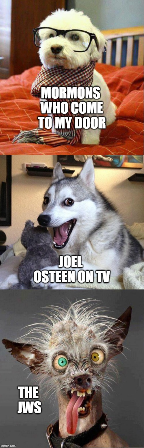 Religion comparison, dog edition |  MORMONS WHO COME TO MY DOOR; JOEL OSTEEN ON TV; THE JWS | image tagged in dog comparison 3 panel,mormons,joel osteen,jehovah's witness,dogs,exmormon | made w/ Imgflip meme maker