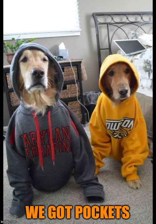 thug Dogs | WE GOT POCKETS | image tagged in thug dogs | made w/ Imgflip meme maker