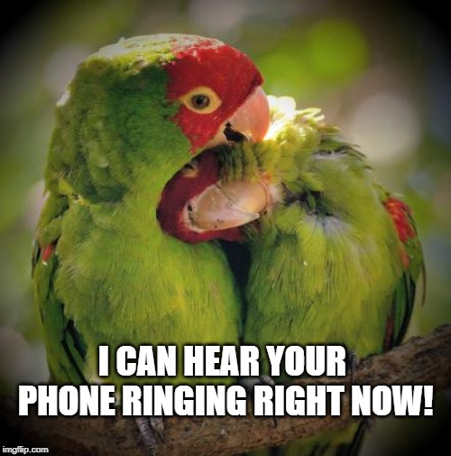 Cuddle Birds | I CAN HEAR YOUR PHONE RINGING RIGHT NOW! | image tagged in cuddle birds | made w/ Imgflip meme maker