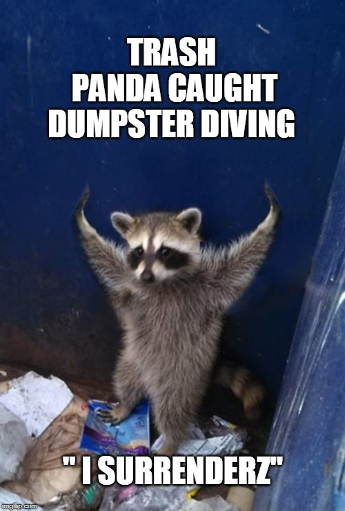 "Dumpster Diving Trash Panda | TRASH PANDA CAUGHT DUMPSTER DIVING "" I SURRENDERZ"" 