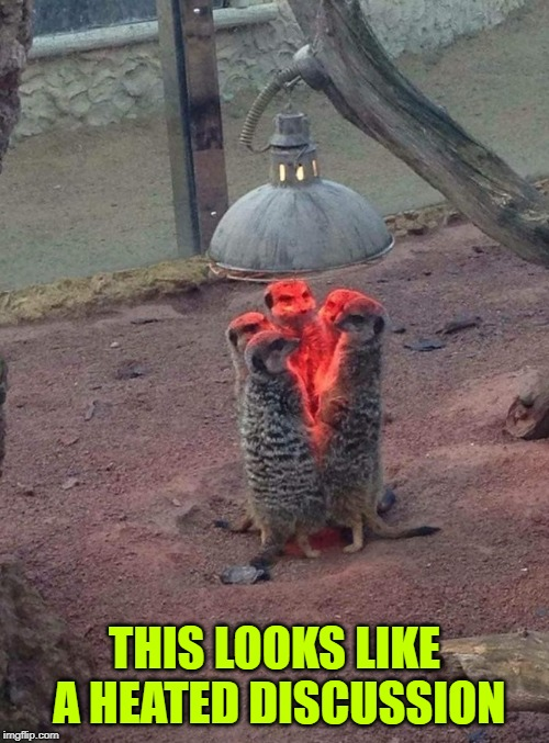 Heated Discussion | THIS LOOKS LIKE A HEATED DISCUSSION | image tagged in funny meercats,heated discussion | made w/ Imgflip meme maker