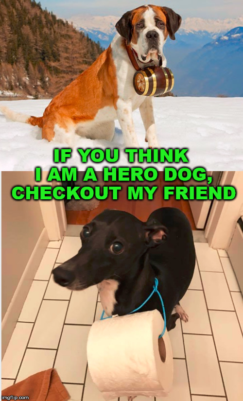 More of a hero in your home | IF YOU THINK I AM A HERO DOG, CHECKOUT MY FRIEND | image tagged in dogs,helpful,save me,funny meme | made w/ Imgflip meme maker
