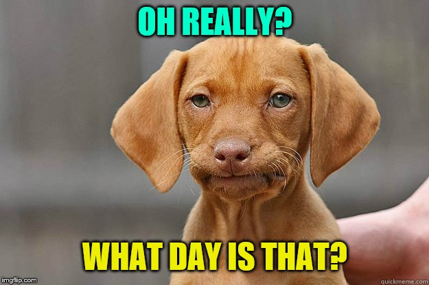 Bored Dog | OH REALLY? WHAT DAY IS THAT? | image tagged in bored dog | made w/ Imgflip meme maker