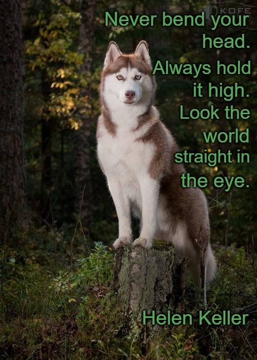 Wolf Wisdom from Helen Keller | Never bend your Helen Keller head. Always hold it high. Look the world straight in the eye. | image tagged in wolves,animals,native american,native americans,american indians,tribe | made w/ Imgflip meme maker
