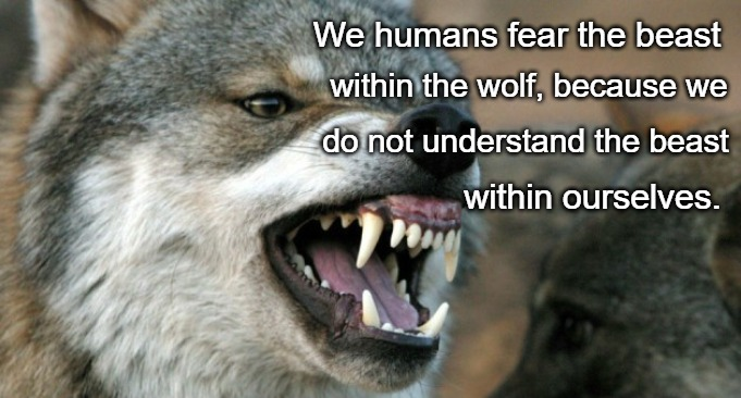 Wolf Wisdom | We humans fear the beast within the wolf, because we do not understand the beast within ourselves. | image tagged in wolves,animals,wolf,native american,native americans,american indians | made w/ Imgflip meme maker