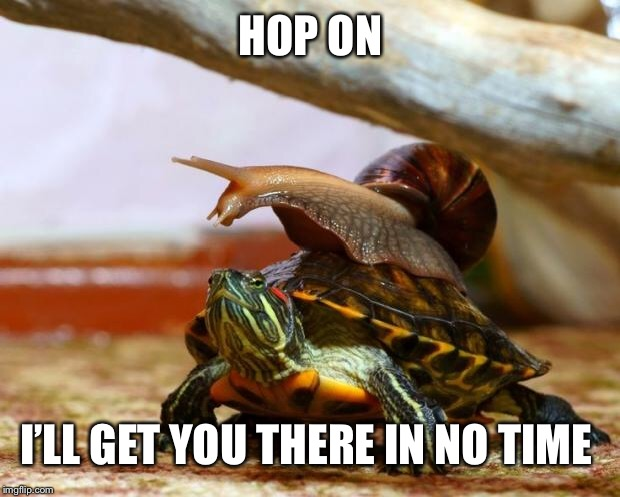 snail on a turtle | HOP ON I'LL GET YOU THERE IN NO TIME | image tagged in snail on a turtle | made w/ Imgflip meme maker