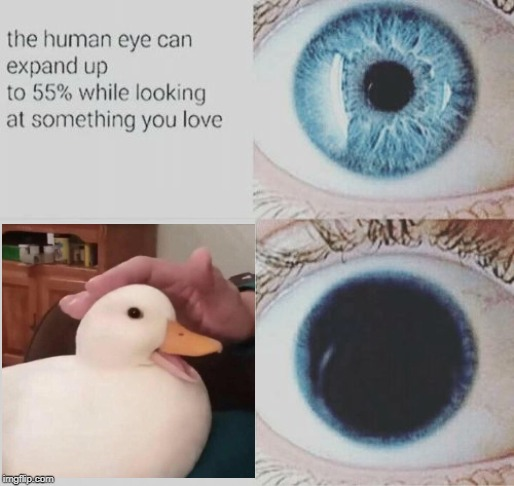 image tagged in eye expand,nice duck | made w/ Imgflip meme maker