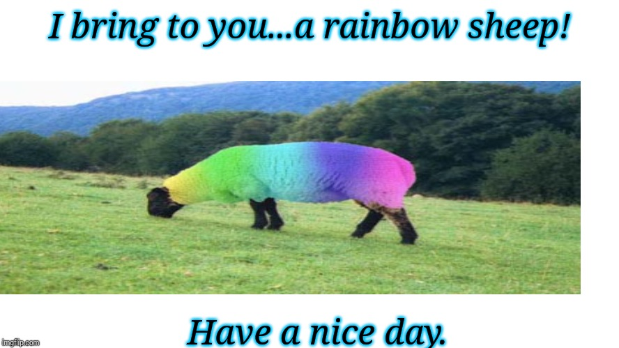 Blank | I bring to you...a rainbow sheep! Have a nice day. | image tagged in blank | made w/ Imgflip meme maker