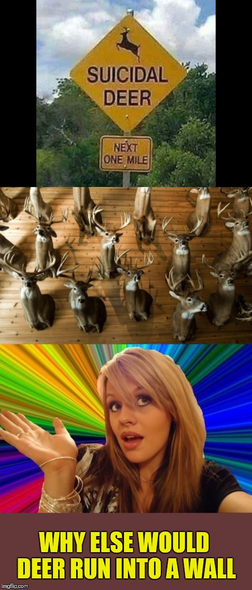 Suicide | WHY ELSE WOULD DEER RUN INTO A WALL | image tagged in memes,dumb blonde,funny,deer,road signs,44colt | made w/ Imgflip meme maker
